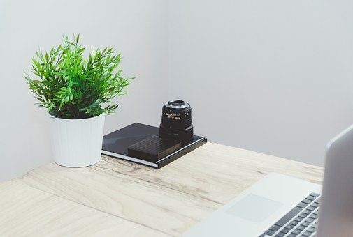 Ways that you can decorate your Office by Purchasing Plants